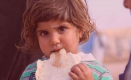 cambio climático y conflictos agudizan crisis alimentarias mundo