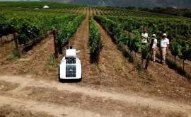 robot terrestre monitoriza parámetros optimizar riego viñedos