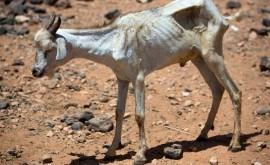 nueva sequía Somalia podría poner riesgo seguridad alimentaria