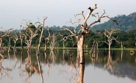 Al menos 91 muertos causa inundaciones Sri Lanka