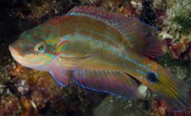 ¿Qué impacto tiene acidificación aguas reproducción peces?
