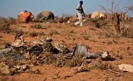 Sequía, desnutrición y enfermedades amenazan vida millones niños África