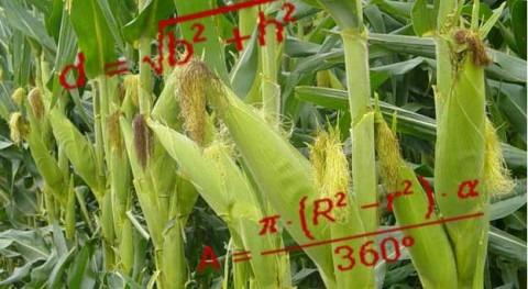 Modelos matemáticos aplicados agricultura