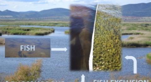 ¿Eutrofización vertidos o peces invasores Tablas Daimiel?