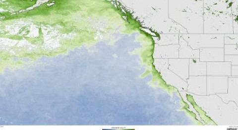 marea algas mortíferas está afectando costa oeste EE.UU.