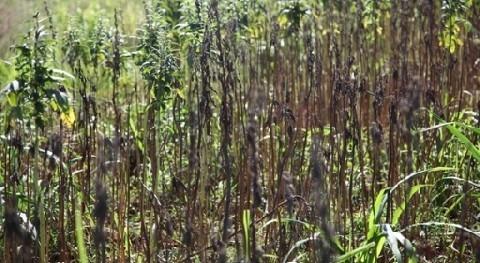 Ministerio Agricultura y Ganadería Paraguay solicita declarar situación emergencia sequía al Departamento Concepción