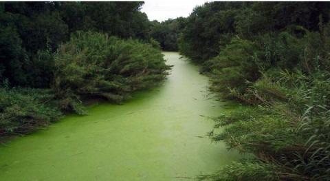 Monitorización automática calidad agua, prioridad EIP Agua Europea
