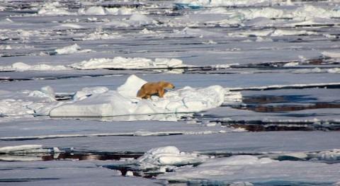 Ártico, punto más caliente cambio climático
