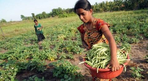 Apoyar agricultores familiares es clave preservar medio ambiente