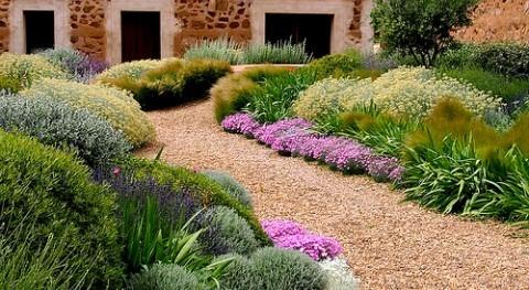 Jardines xerófilos, eficiencia hídrica perder ápice belleza