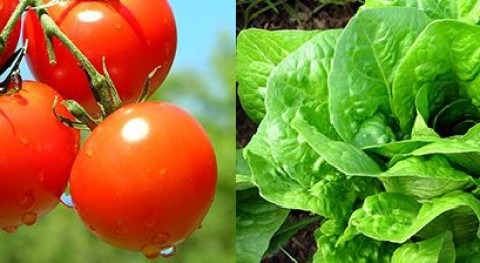 Agroacuacultura: ¿Y si pudiéramos regar varios cultivos mismo agua?