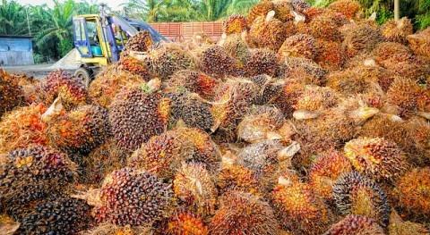 #CambioClimático, ¿mito o realidad? aceite palma