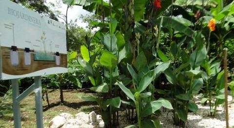 """Biojardineras: humedales artificiales """"ticos"""" (y II)"""