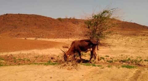 abono 18 vacas logra regenerar suelo desertizado sequía Níger