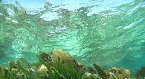 red investigadores Latinoamérica estudia acidificación mar Caribe