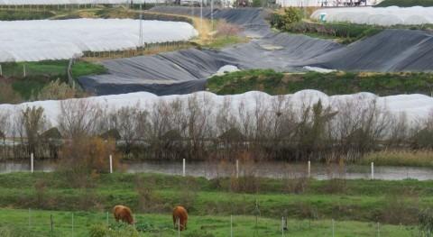 WWF pide al Parlamento andaluz que no ceda quienes se saltan ley y roban agua Doñana