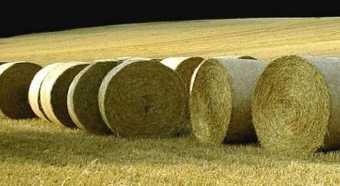 Se analiza ciclo vida cultivos y reducción impacto cambio climático seminario