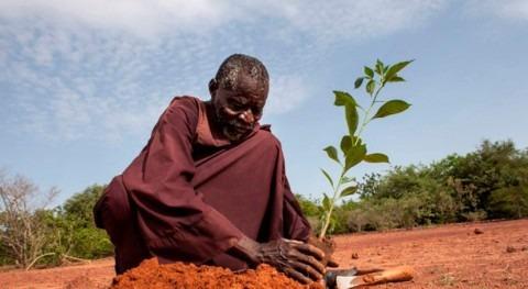 Banco Mundial planea invertir más 5.000 millones dólares zonas áridas África