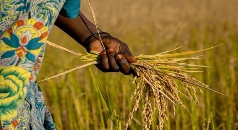 cambio climático provoca aumento pobreza, hambre y desplazamientos África