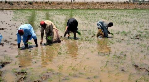 FVC apoya proyecto FAO mejorar agricultura y gestión hídrica Pakistán