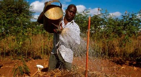 agricultura necesita respuesta urgente frente al cambio climático