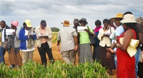 cultivos tolerantes sequía contribuyen seguridad alimentaria Namibia