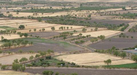 ¿Qué es agricultura secano?