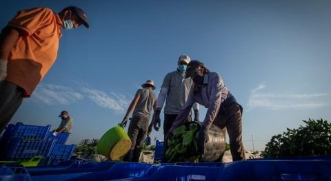 agricultura como servicio esencial tiempos crisis (y siempre)