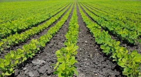 Publicado nuevo mapa aguas afectadas nitratos origen agrario cuenca Ebro
