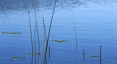 Filósofos naturaleza: AGUA, ápeiron y aire