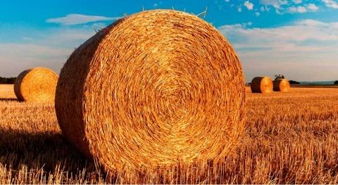 10 frases esenciales acerca gestión agua agricultura