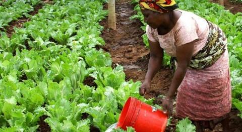 Parlamento navarro pide reconocer mayor impacto cambio climático mujeres