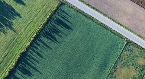 ¿Son futuro granjas verticales?