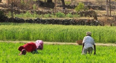 agricultura familiar América Latina necesita nuevas políticas públicas