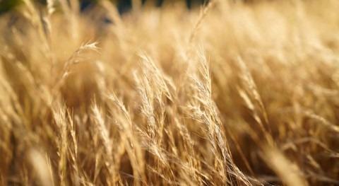 intensificación sequías afectará emisión nitrógeno agricultura secano