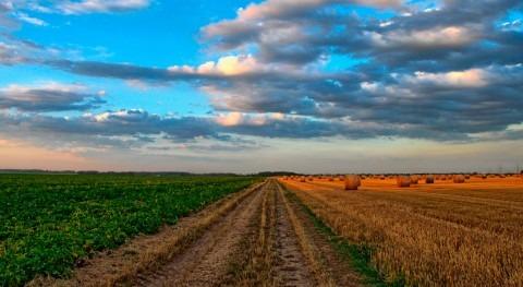 ¿Cuáles son efectos cambio climático agricultura?