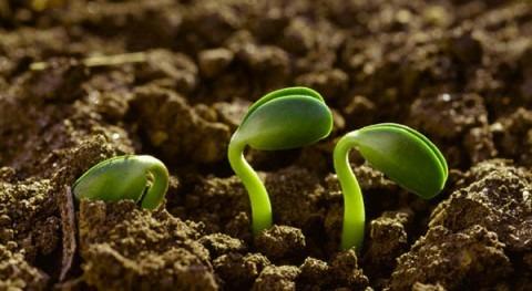 Recursos agroecosistema