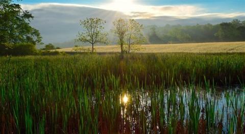 ¿Cómo lograr nivel agua y nitrógeno idóneos agricultura?