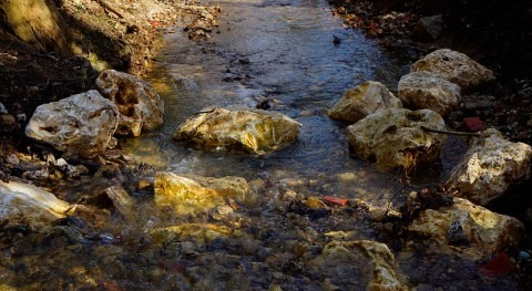 Cambio climático y contaminación, combinación que mata biodiversidad agua dulce