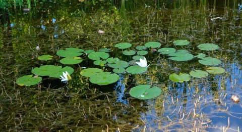 hidrología suelo, clave profundidad raíces plantas