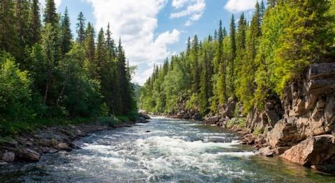 estudio, flujo río se reduce áreas donde se han plantado bosques