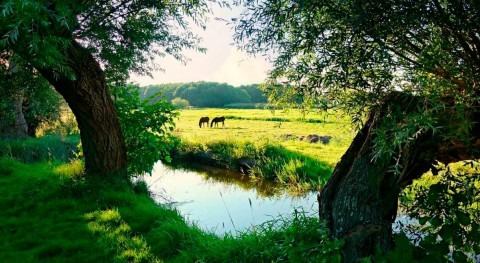 biodiversidad, crucial alimentación y agricultura, está desapareciendo cada día
