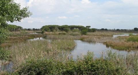 Imagen del Parque Nacional de Doñana (wikipedia/CC)