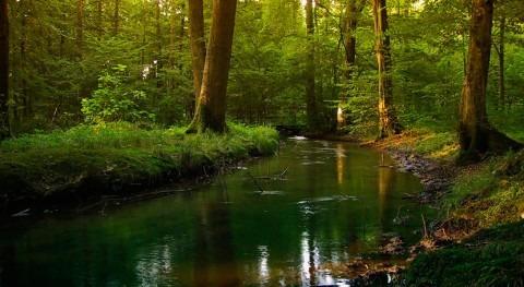 CE pide Alemania que corrija normas protección aguas superficiales