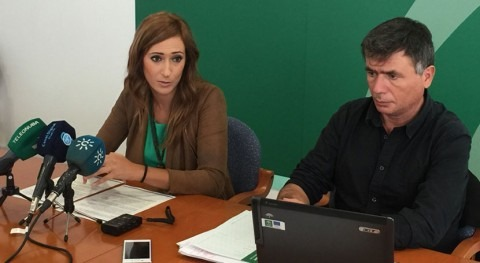 Marismas Odiel registra 8 nuevos ejemplares águila pescadora nacidos Huelva durante 2016