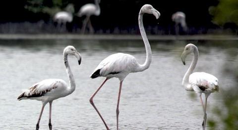 Emiratos Árabes Unidos designa área protegida Al-Zora como sitio Ramsar