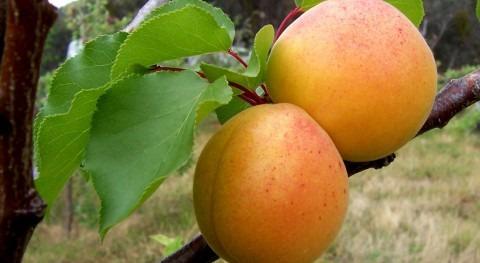 Implementación manejo eficiente riego agricultura sostenible