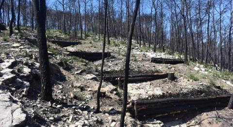 Finalizada restauración hidrológico-forestal zonas afectadas incendios Valencia