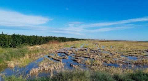 CHJ coordina aportación recursos hídricos al Parque Natural Albufera