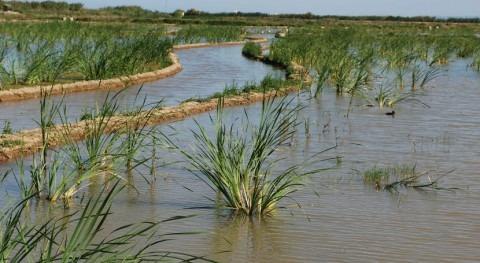 Confederación Júcar inicia envío agua al lago l'Albufera